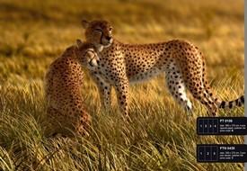 článek safari 22
