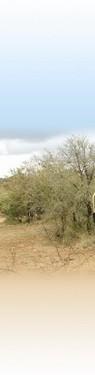 článek safari 4