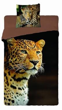 článek safari 29